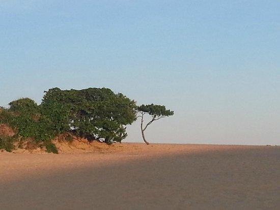 Jockey's Ridge State Park: dunes3