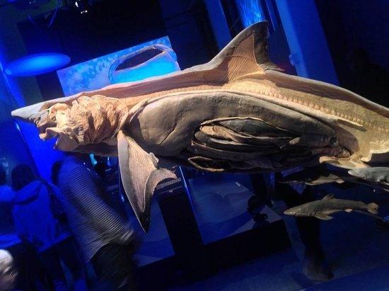 Georgia Aquarium: Monsters Inside exhibit