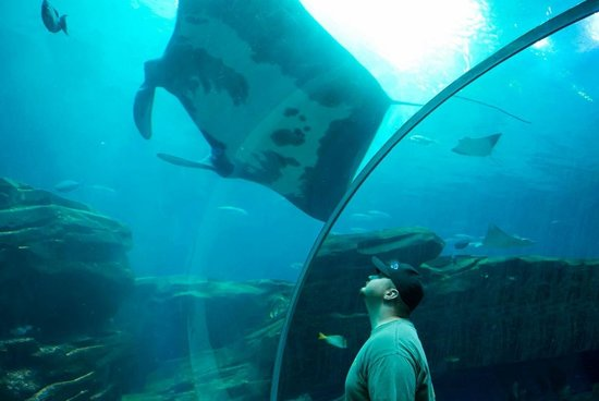 Georgia Aquarium: Crazy huge ray & my husband