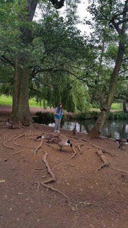Wollaton Hall and Park: feeding the ducks