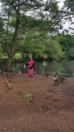 Wollaton Hall and Park: love feeding the ducks here