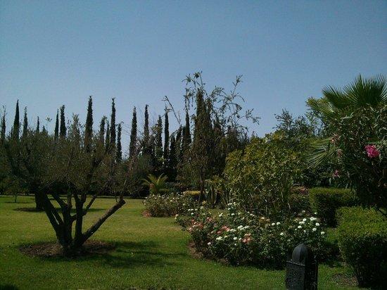 Riad Jawad: Garden