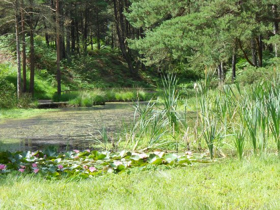 """The Blue Pool and Tea House: water lilies on the """"little pool"""" on walk round the Blue Pool"""