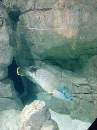 Istanbul Sea Life Aquarium: Harika