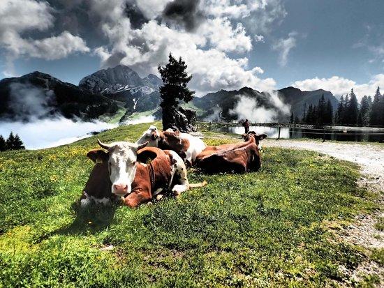 Alpenhotel Plattner: Ruhe genießen