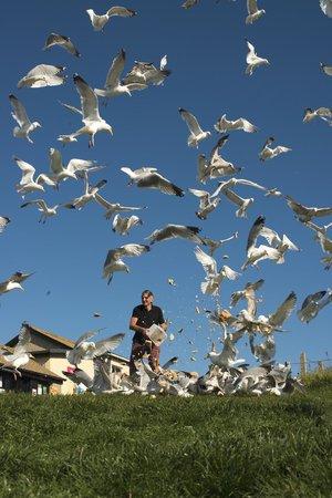 Polpeor Cafe: Seagull breakfast
