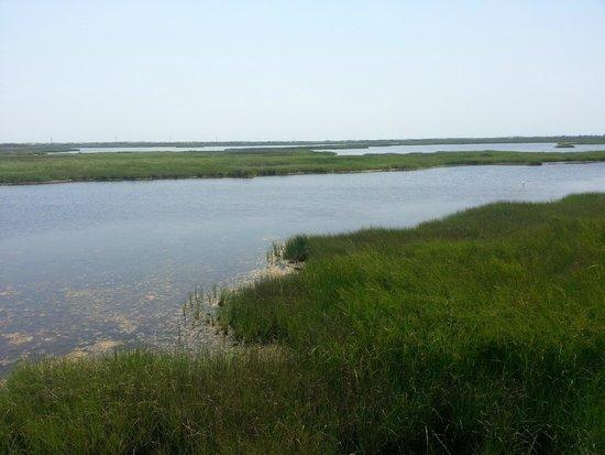 Bodie Island Lighthouse : the marsh