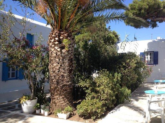 Afroditi Garden : Patio