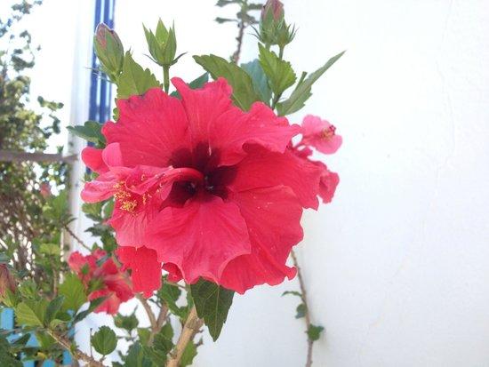 Afroditi Garden : Flowers
