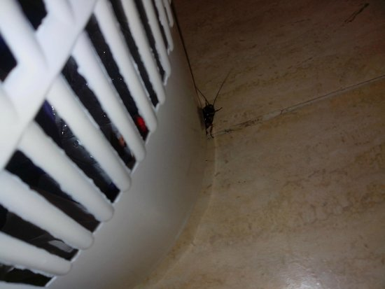 GF Fanabe: visita inesperada cucaracha