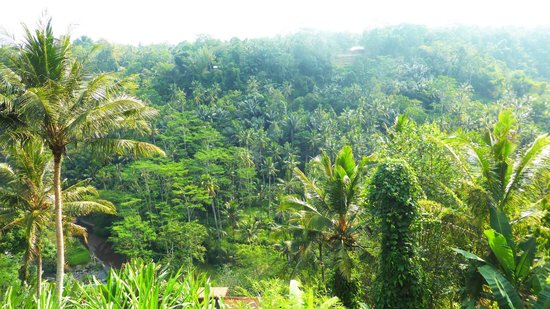 Kupu Kupu Barong Villas and Tree Spa: Beautiful view of the Ayung Valley from Villa 10's balcony