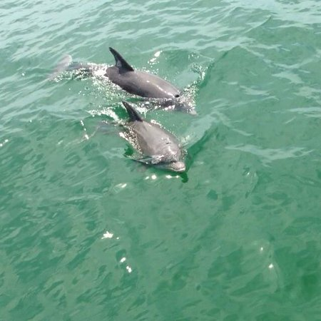 ParrotDise Express Day Tours: Dolphin Fun!