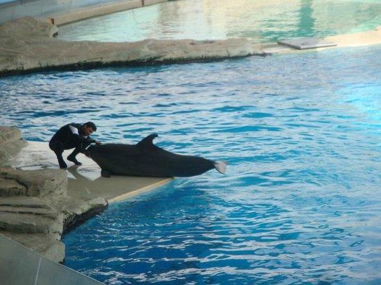Oltremare : coccole ai delfini