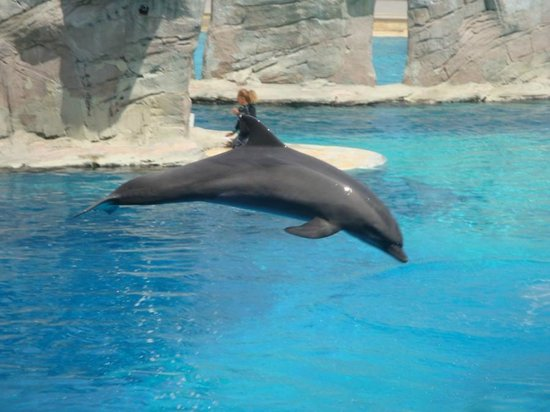 Oltremare : delfino che salta