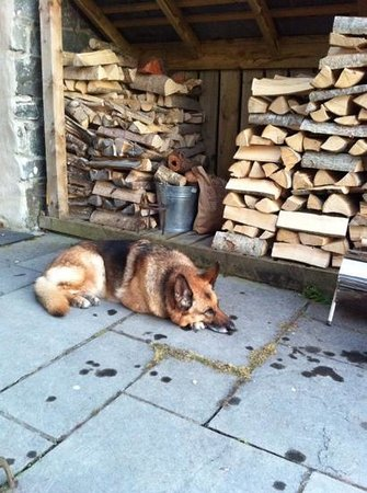 The Slate Shed B &B at Graig Wen: And... relax!
