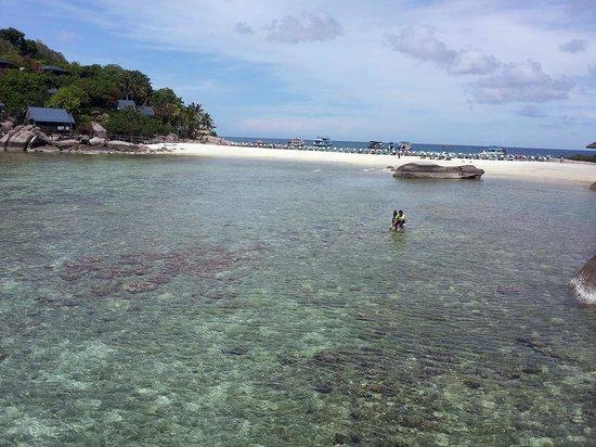Koh Nang Yuan: la spiaggia vista dal pontile di attracco