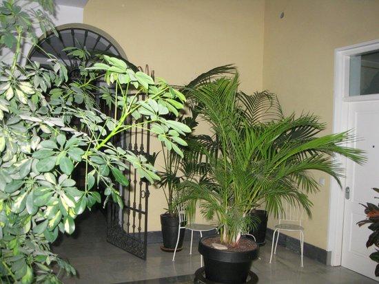 Apartamentos Mariscal: Il patios interno alla palazzina