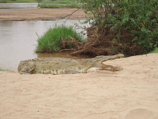 Tsavo East: coccodrillo