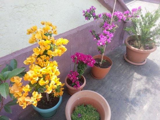 Finch Apartments: Terrace flowers