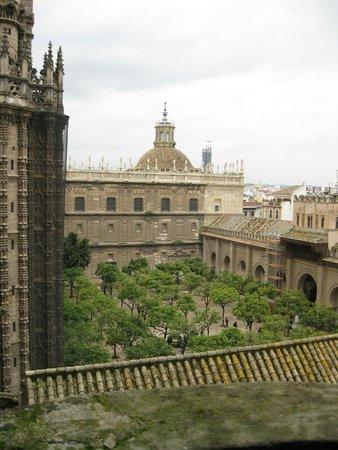 Catedral de Sevilla: Vista dalla Giralda
