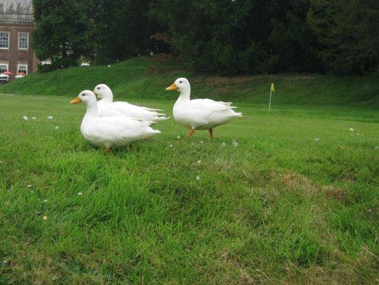 Warner Holme Lacy House Hotel: resident white ducks