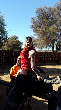 Safari Ostrich Show Farm: Aitting on a osttich.