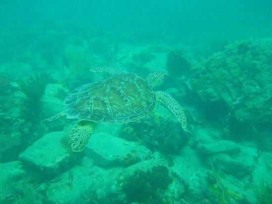 Octopus Diving: Turtle Reef