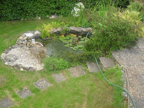 The Cottage: Fish pond