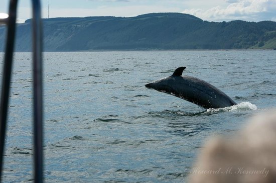 Bottlenose Dolphin breaching next to the Ecoventures rib
