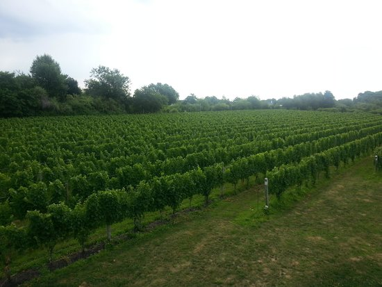 Sannino Vineyard B and B: A room with a view!!!!