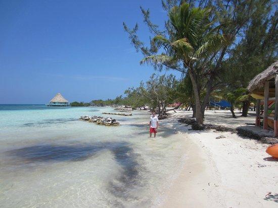 Belizean Dreams Resort : Coco Plum