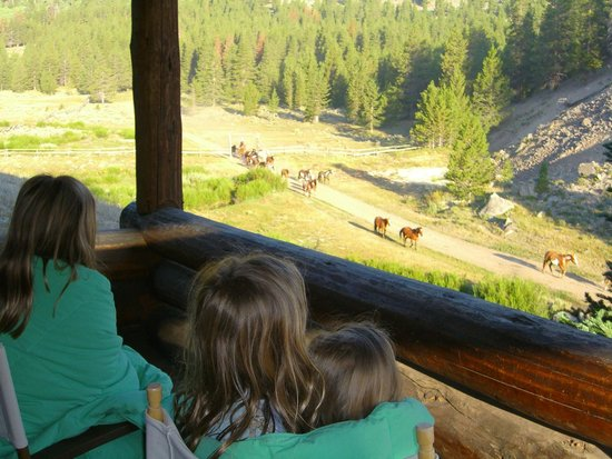 Elkhorn Ranch: Watching the horses come in every morning :)