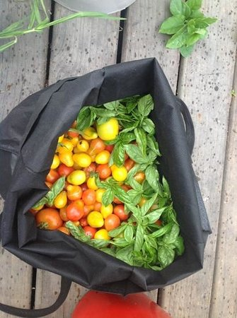 Fat Cat Eco Backpackers : this is what came from the garden, straight to the big shared meal i joined in on!