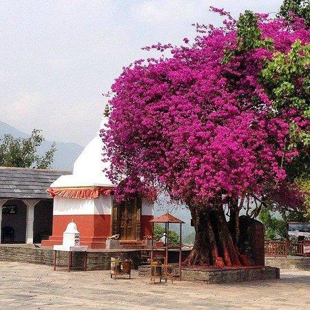 Bindhya Basini Temple: Вход в храм, подношение Хануману