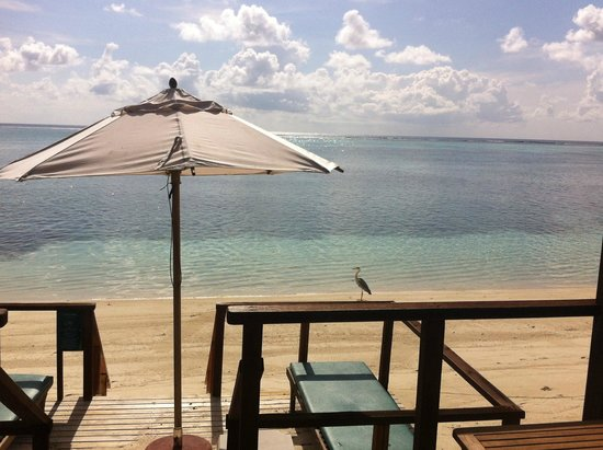Meeru Island Resort & Spa : View from the room