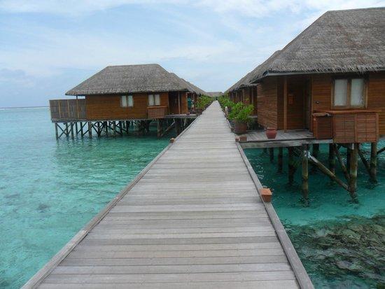 Meeru Island Resort & Spa : Rooms over the sea