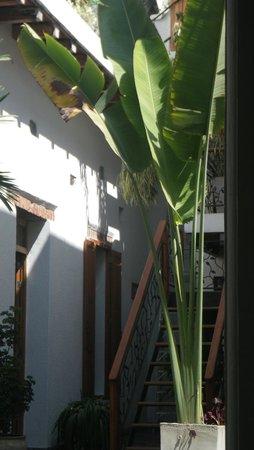 카사 베르데 호텔 사진