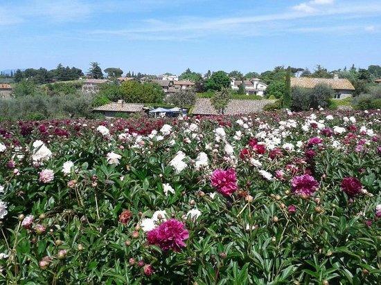 Moutan Botanical Center: fioritura 2014