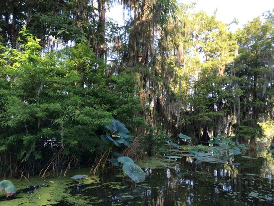 Cajun Country Swamp Tours : even more views