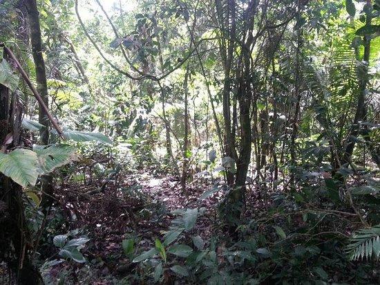 Libertad Jungle Lodge : Jungle walk