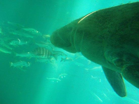 Florida Dolphin Tours - Day Tours : Homosassa State Park