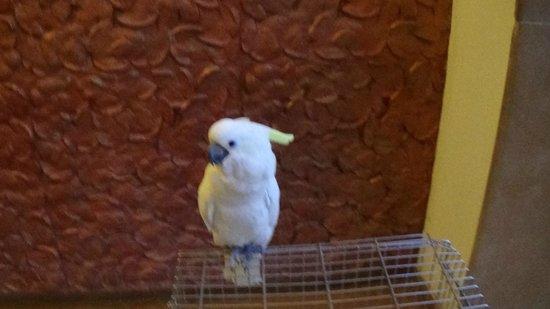 The Windflower Resort & Spa, Mysore : white parrot