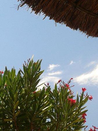 Camping Sunelia Le Bois Fleuri : entre nature et piscine