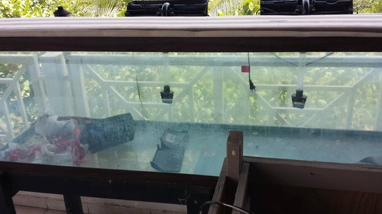 Sea Breeze Hotel: Lobster tank (as described in the confirmation e-mail)