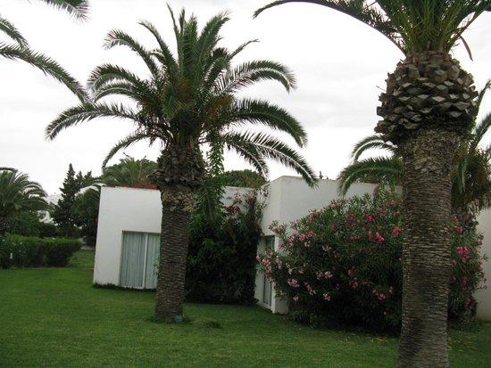 SENTIDO Phenicia: пальмы