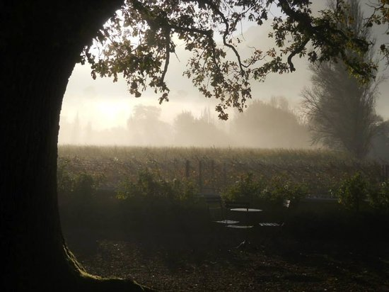 Auberge Clermont: Oak tree in the mist
