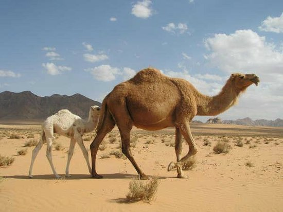 A mother and baby traveling in Wadi Rum
