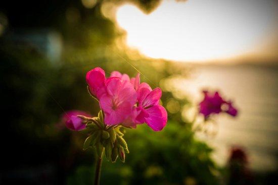 Paradisso Beach Villas: Цветок