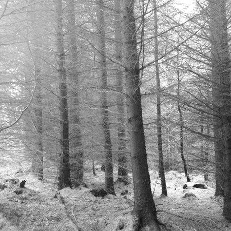 Dalby forest for those who love walking