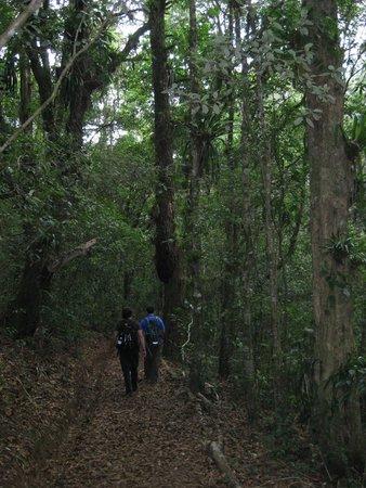 Parque Nacional La Tigra: Trail and forest in the park